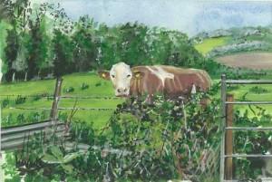 "'Cow 1' 12""x 8"" Box Canvas Print £25 Original Painting £85"