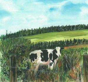 "Cow 2 26.5x23.7cm 10.5""x9.5"" Print £25 Original Painting £125"