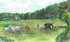 "Cows, County Fermanagh 42.5x26cm 16.5""x 10.25"" Print £50 Original Painting £250"