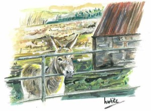 "Donkey at the Gate 25x20.5cm 9.75""x8"" Print £25 Original Painting £100"