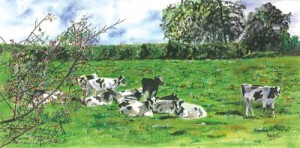 "'Fresian Cows, County Tyrone'  24""x 12"" Box Canvas Print £85<br/>Print+2""Mount/Backing £75 Original Painting Sold"