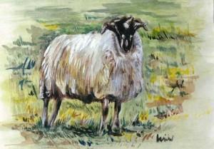 "Sheep 18x12.5cm 7""x5"" Print £20 Original Painting Sold"