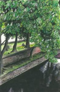 "Chestnut Trees, Enniskillen 19.5x30cm 7.75""x11.75""  Print £25 Original Painting £125"