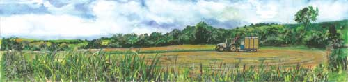 """Bringing in the Silage 61x15cm 24""""x6"""" Print £40 Original Painting £150"""